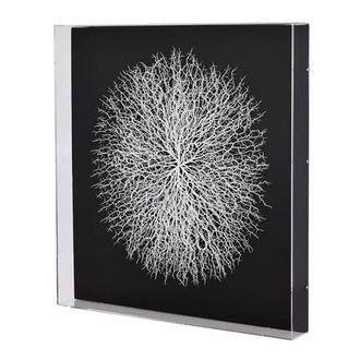 Clear Sea Fan Shadow Box