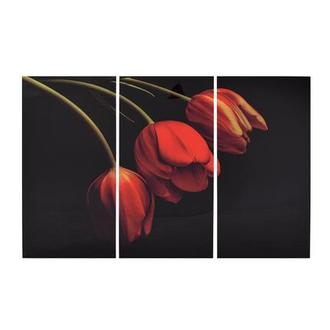 Belles Tulipes Set of 3 Acrylic Wall Art