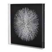 Clear Sea Fan Shadow Box  main image, 1 of 7 images.