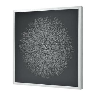 Silver Sea Fan Shadow Box
